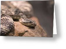 A Tiger Rattlesnake At The Henry Doorly Greeting Card