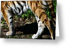 A Tigers Stride Greeting Card