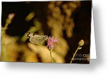 A Tilting Butterfly  Greeting Card