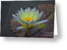 A Tinge Of Blue Greeting Card