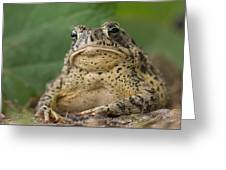 A Toad Appears To Be Frowning He Sits Greeting Card