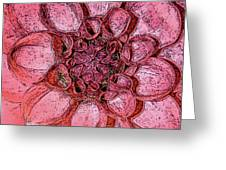 A Touch Of Coral Greeting Card