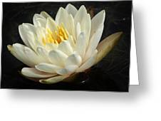 A Touch Of Elegance On The Pond Greeting Card
