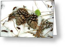 A Touch Of Moss Greeting Card