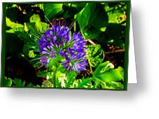 A Touch Of Violet Greeting Card