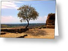 A Tree And A Rock Greeting Card