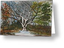 A Tree For All Seasons  Greeting Card
