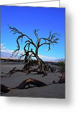A Tree In An Arid Land Greeting Card