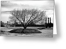 A Tree In Fort Worth Greeting Card