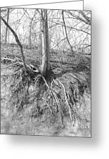A Tree In Shiawassee Park, Living On The Edge Greeting Card