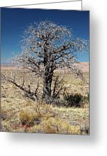 A Tree In The Dry Land Color Greeting Card
