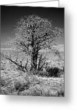 A Tree In The Dry Land Greeting Card
