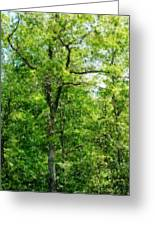 A Tree In The Woods At The Hacienda  Greeting Card