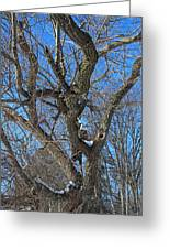 A Tree In Winter- Vertical Greeting Card