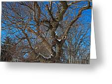 A Tree In Winter- Horizontal Greeting Card
