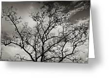 A Tree Laid Bare Greeting Card