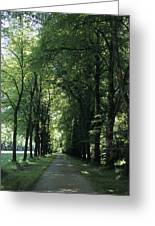 A Tree Lined Path Leads To Mad King Greeting Card