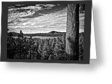 A Tree Stands Guard Over Big Bear Lake Greeting Card