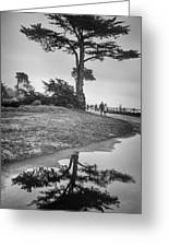 A Tree Stands Tall Greeting Card