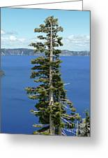 A Tree With A View Greeting Card by Methune Hively