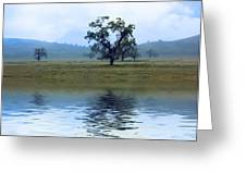 A Trees  Reflection Greeting Card