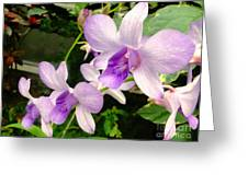 A Trio Of Pale Purple Orchids Greeting Card