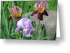 A Trios Of Irises Greeting Card