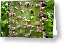 A Trunk Of Thorns Greeting Card