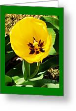 A Tulip Embracing Sunshine Greeting Card