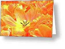 A Tulip Fully Open Greeting Card