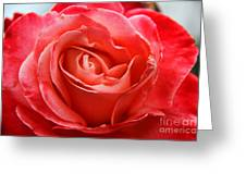 A Unique Rose Just For You Greeting Card