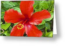 A Very Red Flower Greeting Card