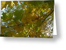 A View From Below Greeting Card