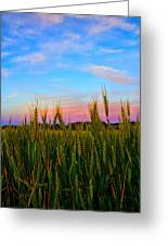 A View From Crop Level Greeting Card