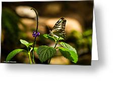 A  View Of A Butterfly Greeting Card