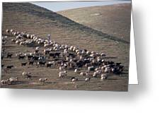 A View Of Sheep In The Judean Desert Greeting Card