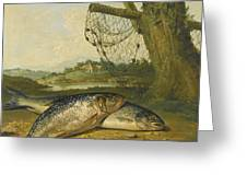 A View On The River Derwent At Belper Derbyshire With A Salmon And A Grayling On The Bank Greeting Card
