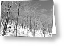 A View Through The Woods Greeting Card