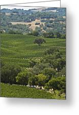 A Vineyard In The Anderson Valley Greeting Card