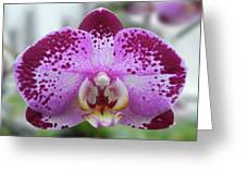 A Violet Orchid Greeting Card