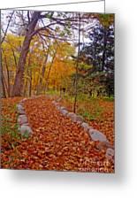 A Walk Along Natures Path Greeting Card