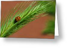 A Walk In The Tall Grass Greeting Card