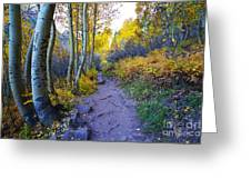 A Walk In The Woods Greeting Card by Kate Avery