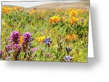 A Walk Though The Poppy Fields Greeting Card