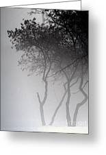 A Walk Through The Mist Greeting Card