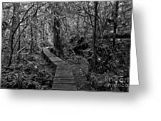 A Walk Through The Willowbrae Rainforest Black And White Greeting Card