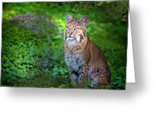 A Watchful Eye Greeting Card
