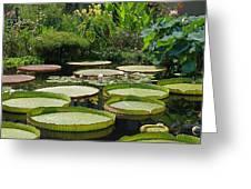 A Water Garden Greeting Card
