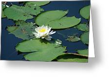 A Water Lily Bloom Greeting Card