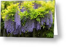 A Wealth Of Wisteria Greeting Card